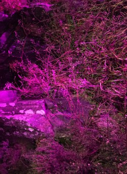 PINK NOISE is a series of performative actions and interventions in space and time. PINK NOISE is a body concert in a sonic landscape. PINK NOISE is a living state of corporeality experienced live. PINK NOISE is the pink elephant in the room. PINK NOISE is a tidal wave. PINK NOISE is still life in slow motion. PINK NOISE is a twilight ballet. PINK NOISE is a tye dye t-shirt in the wind. PINK NOISE is a Rubik's cube of pink mirrors that face each other. PINK NOISE is a portal towards a vortex of the unknown. PINK NOISE is a shift in frequency to a new paradigm. PINK NOISE is a parallel universe. PINK NOISE is the evolutive power in the persistence of erosion. PINK NOISE is order and chaos dancing. PINK NOISE is delicate anarchy. PINK NOISE is a signal that makes no sense. PINK NOISE is an aesthetic. PINK NOISE is a feeling.<br />