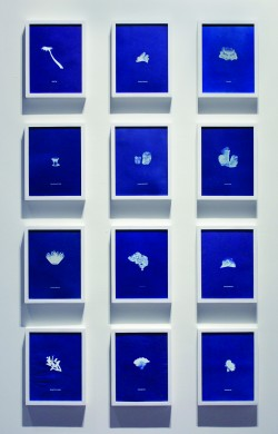 Pancho Westendarp<br />