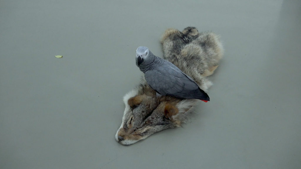 Beuys And A Coyote The Silent Relationship